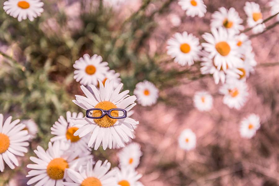 Blumenwiese und eine davon trägt eine Brille